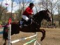 Кони, конкур и казаки - сильное зрелище!
