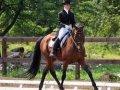 Состязания по конному спорту на Кубок мэра прошли в Хабаровске