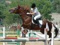 Победители Чемпионата по конному спорту поедут на спартакиаду молодежи России. Фоторепортаж. Результаты