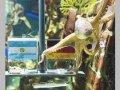 Испанские предприниматели хотят купить осьминога Пауля за 30 тысяч евро