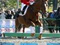 Открытый Чемпионат и первенство Приморского края по конному спорту на кубок Янковского пройдут в Находке