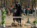 Семь чистокровных английских верховых лошадей завезли в Приморье