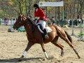 В Богородском в первый раз в области прошел конный марафон