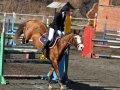 Всадница из Владивостока отличилась на российских соревнованиях по конному спорту