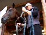 В Анучинском районе готовятся к конным соревнованиям на Кубок губернатора Приморского края. Видео