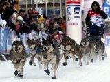 Чемпионат по зимним дисциплинам ездового спорта пройдет в Петропавловске-Камчатском