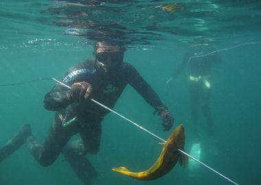 Алексей Кравченко – обладатель «Кубка Тихого океана» по подводной охоте-2018