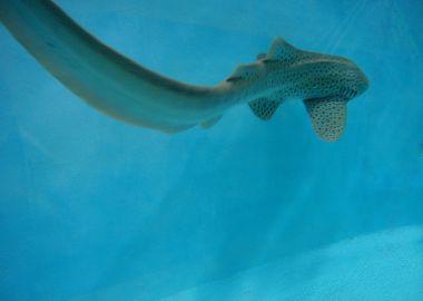Акулы-зебры поселились в Приморском океанариуме