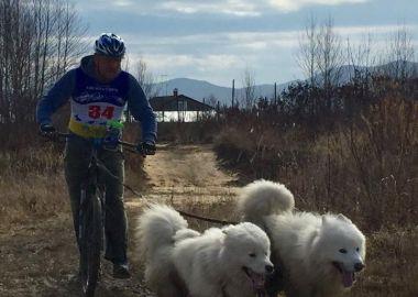 Краевой Чемпионат по ездовому спорту «Приморская осень» прошел в Артеме